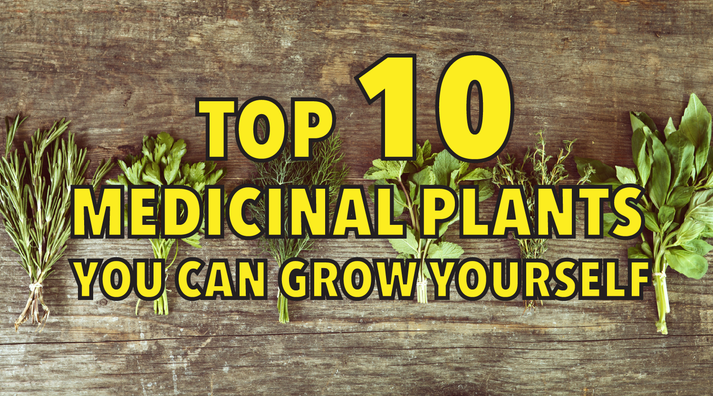 top 10 medicinal plants you can grow yourself
