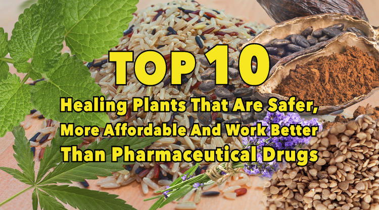 Top 10 plants that work better than pharmaceutical drugs