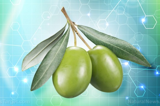 Science-Study-Olives