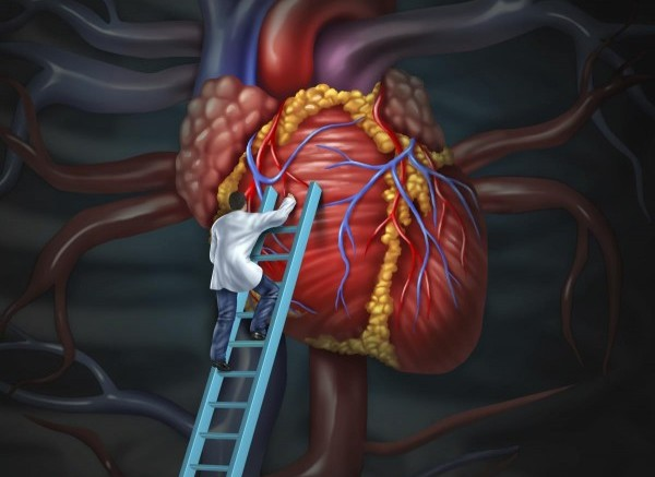 Heart doctor  therapy health care and medical concept with a surgeon or cardiologist  climbing a ladder to monitor and inspect  the human cardiovascular anatomy for a hospital diagnosis treatment.
