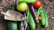 Crops-Vegetables-Farm-Garden